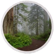 Redwoods Rising In Fog Round Beach Towel