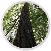 Redwoods Sequoia Sempervirens Round Beach Towel