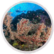 Reef Scene With Sea Fan, Papua New Round Beach Towel