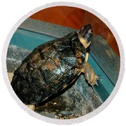 Reflecting Turtle Round Beach Towel