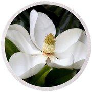 Regal Southern Magnolia Blossom Round Beach Towel