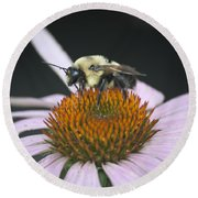 Resting Bee Squared Round Beach Towel