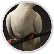 Ring-necked Dove Round Beach Towel