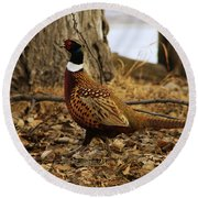 Ring-necked Pheasant Round Beach Towel