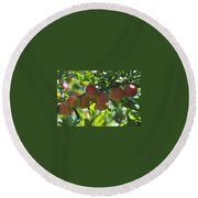 Ripe Fleshy Plums On The Branch Round Beach Towel