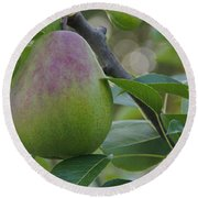 Ripening Pear In Tree Round Beach Towel