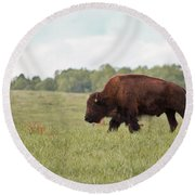 Roaming The Plains Round Beach Towel