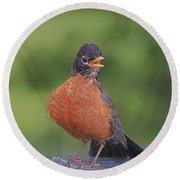 Robin In Distress Round Beach Towel by Deborah Benoit
