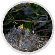Robin Nestlings Round Beach Towel by Ted Kinsman