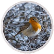 Robin On A Frosty Morning Round Beach Towel