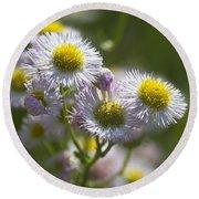 Robin's Plantain - Alabama Wildflowers Round Beach Towel