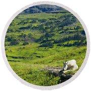 Rocky Mountain Goat Glacier National Park Round Beach Towel