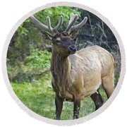 Roe Deer In Forest, Canadian Round Beach Towel