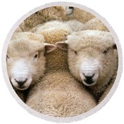 Romney Sheep Round Beach Towel