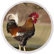 Rooster Gallus Gallus Northumberland Round Beach Towel