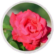 Rose In The Morninglight Round Beach Towel