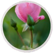Rose With Pink Glow Round Beach Towel