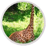 Rothschild Giraffe Round Beach Towel