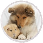 Rough Collie Pup And Yellow Guinea Pig Round Beach Towel