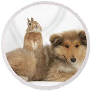 Rough Collie Pup With Sandy Netherland Round Beach Towel