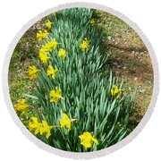 Row Of Daffodils Round Beach Towel
