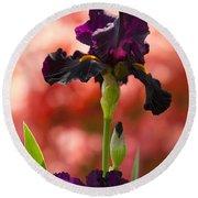 Royal Purple Tall Bearded Iris With Peachy Azalea Background Round Beach Towel