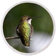 Ruby-throated Hummingbird - Hummingbird - Content Round Beach Towel