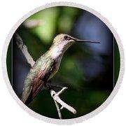 Ruby-throated Hummingbird - Just Beautiful Round Beach Towel
