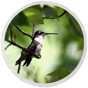Ruby-throated Hummingbird - Shade Round Beach Towel