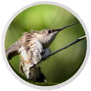 Ruby-throated Hummingbird  - The Stretch Round Beach Towel