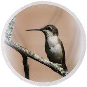 Ruby-throated Hummingbird - Totally Innocent Round Beach Towel