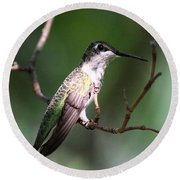 Ruby-throated Hummingbird - Hanging Low Round Beach Towel