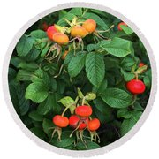 Rugosa Rose With Rose Hips Round Beach Towel