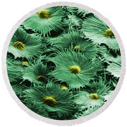 Russian Silverberry Leaf  Round Beach Towel
