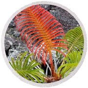Sadleria Fern Hawaii Round Beach Towel