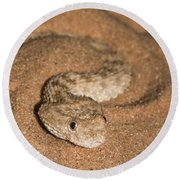 Sahara Sand Viper Cerastes Vipera Round Beach Towel