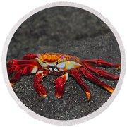 Sally Lightfoot Crab Round Beach Towel