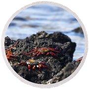 Sally Lightfoot Crabs Round Beach Towel