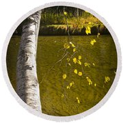 Salmon During The Fall Migration In The Little Manistee River In Michigan No. 0887 Round Beach Towel