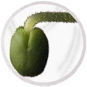 Salvia Polystachya Sprout Round Beach Towel