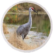 Sandhill Crane Beauty By The Pond Round Beach Towel