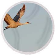 Sandhill Crane In The Morning Light Round Beach Towel