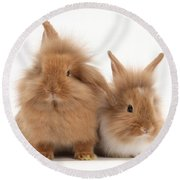 Sandy Lionhead Rabbits Round Beach Towel