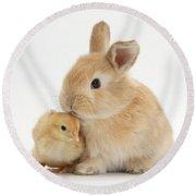 Sandy Rabbit And Yellow Bantam Chick Round Beach Towel