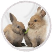 Sandy Rabbits Sharing Grass Round Beach Towel