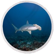 Scalloped Hammerhead Shark Round Beach Towel