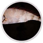 Scalloped Ribbonfish Round Beach Towel