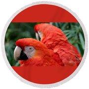 Scarlet Macaws Round Beach Towel