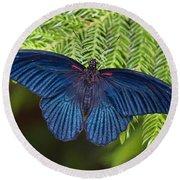 Scarlet Swallowtail Round Beach Towel by Joann Vitali