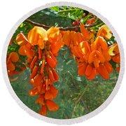 Scarlet Wisteria Tree - Sesbania Punicea Round Beach Towel